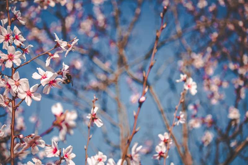 Primavera In Val Di Susa