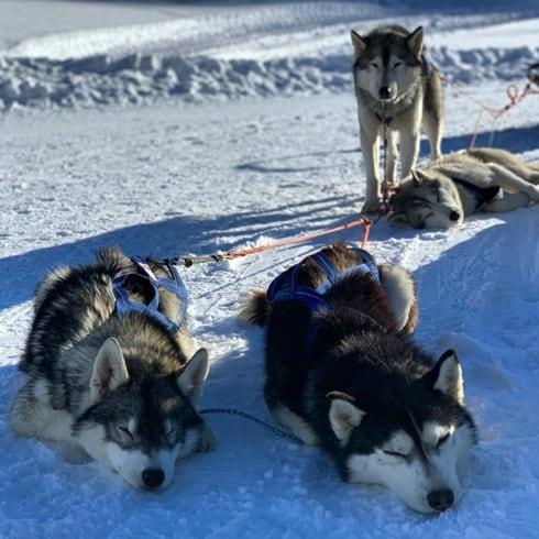 Cosa fare in inverno in Val di Susa - Sleddog
